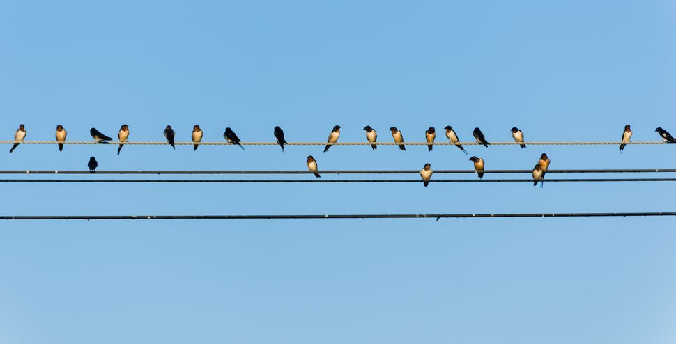 16079868 – too many swallows on a wire with blue sky
